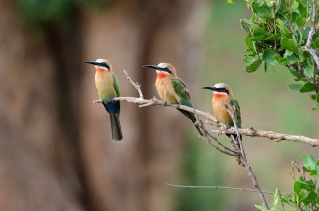 Pafuri Camp Birdlife