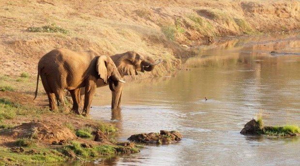 Pafuri Elephant Experience