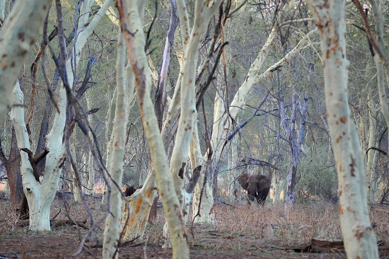Elephant Sighting at Pafuri