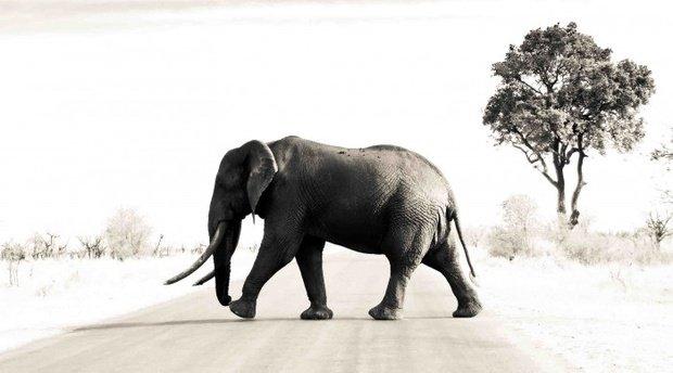 Elephant Sighting at Pafuri Camp