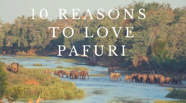 10 Reasons to Love Pafuri Pafuri Camp Return Africa