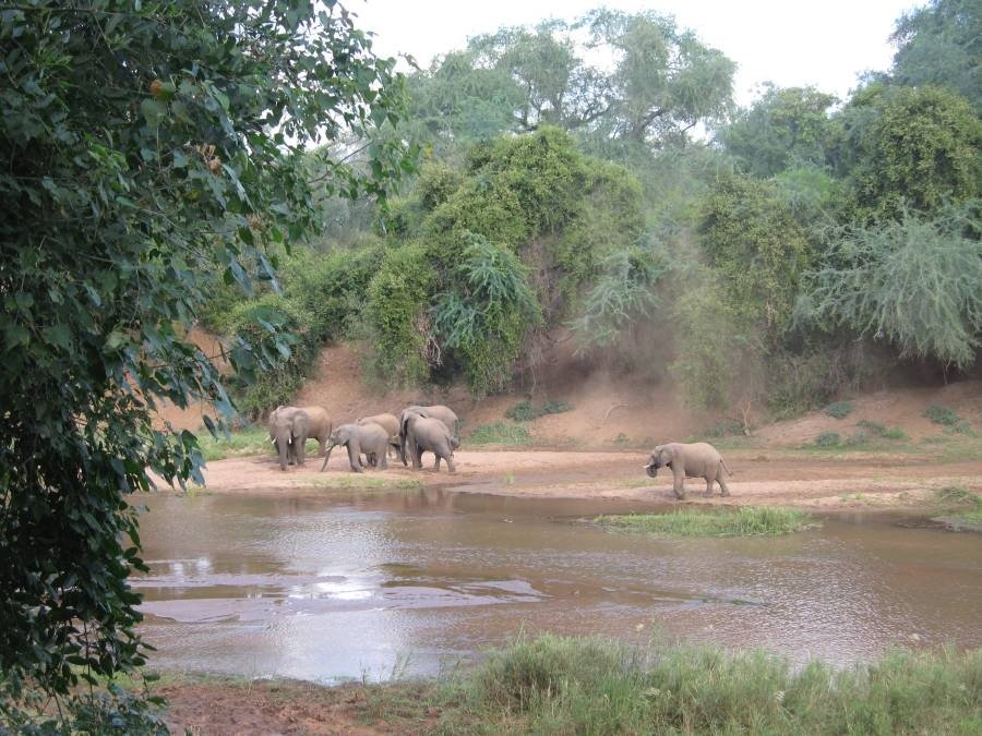 Pafuri Camp Elephant Sightings