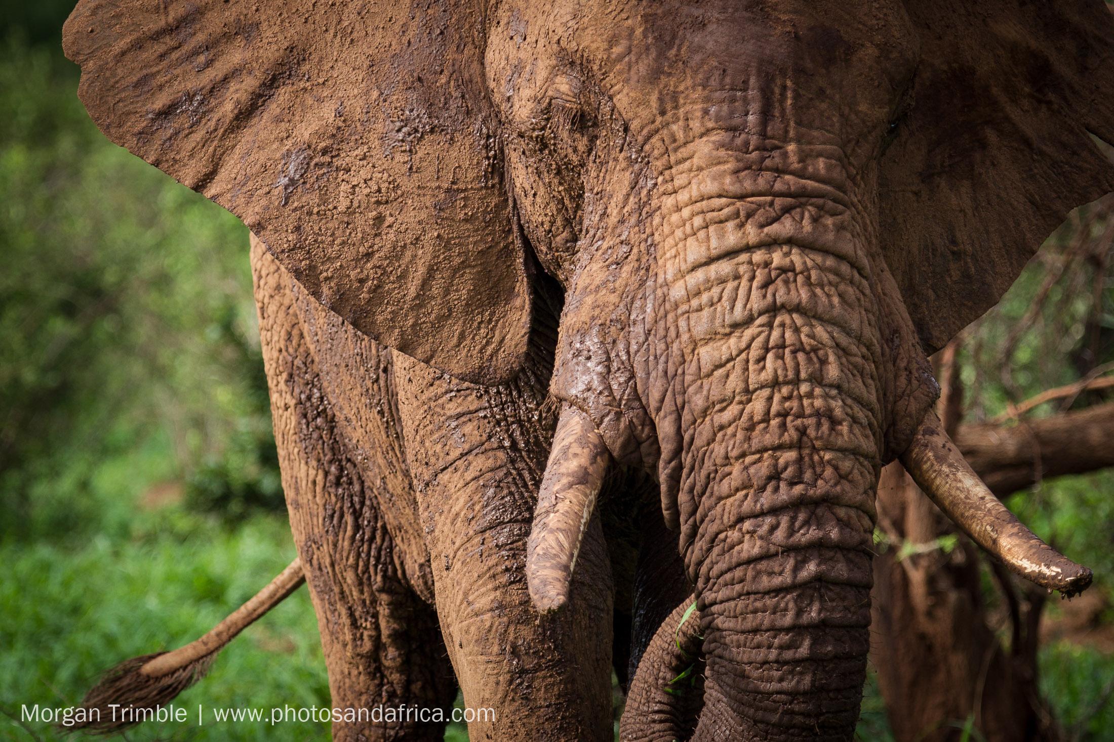 Elephants of Pafuri