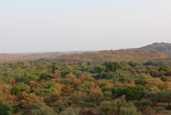 Kruger Park trees view