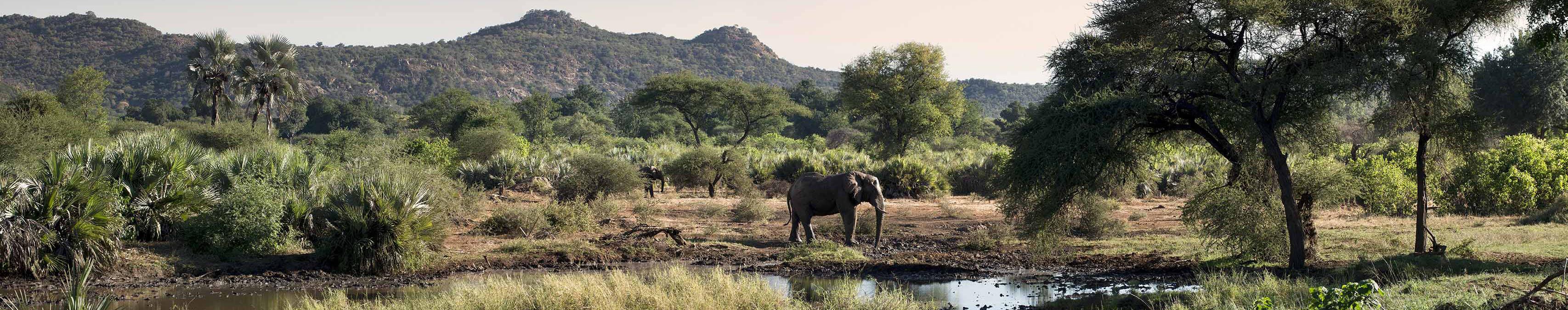 Silence of the Elephants
