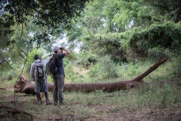 Northern Kruger National Park Pafuri Walks