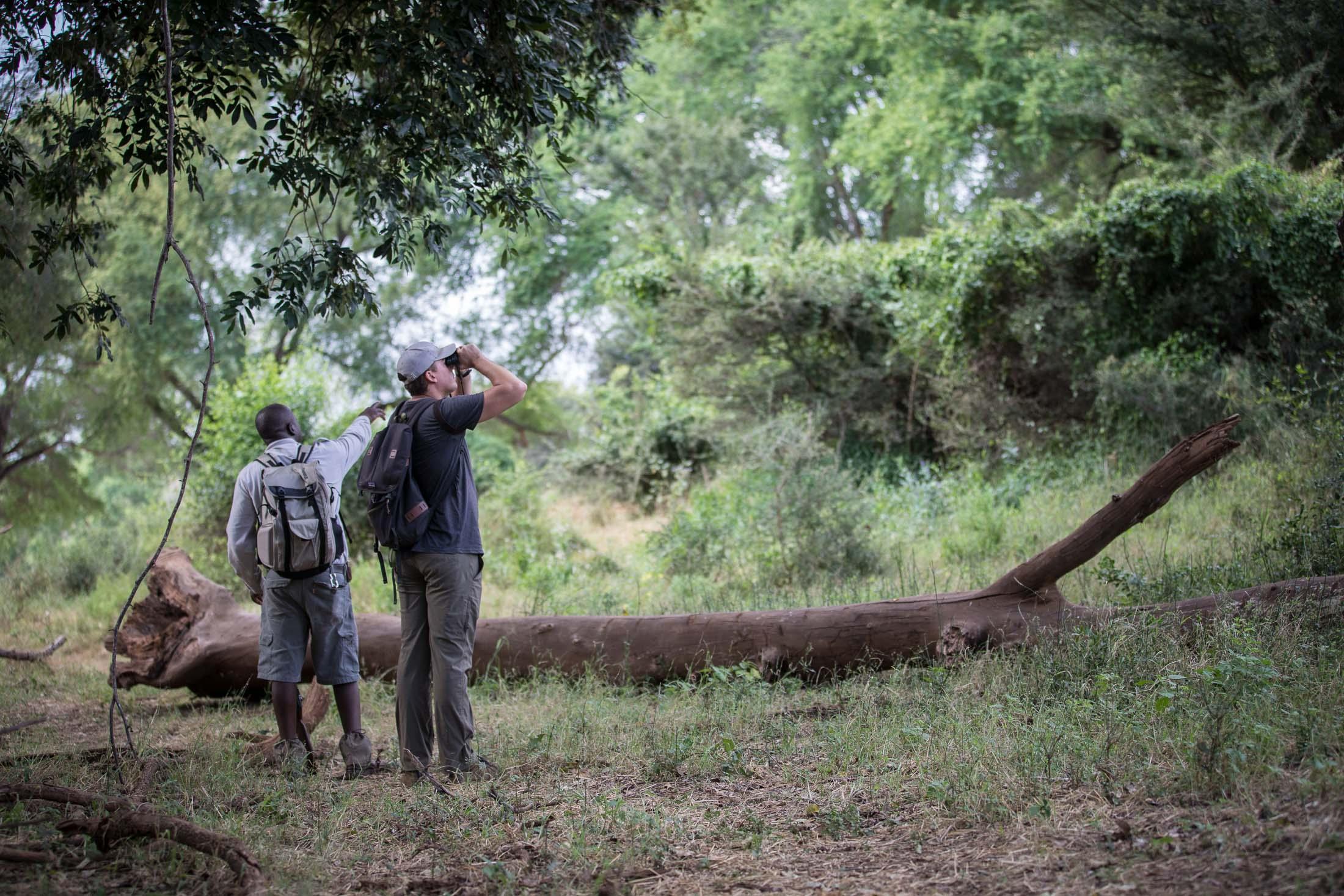 The Incidental Tourist: The Pafuri Walking Trails
