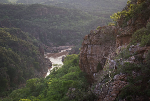 Northern Kruger river and trees