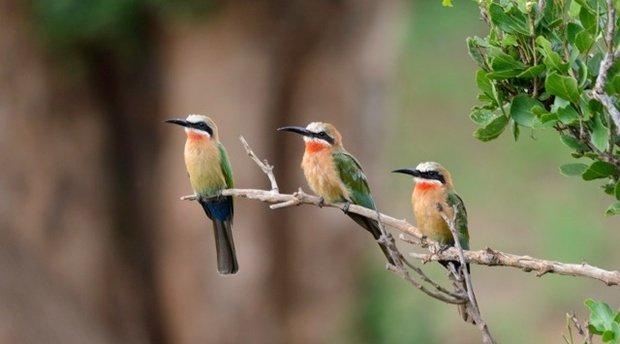 Godfrey's Birding report