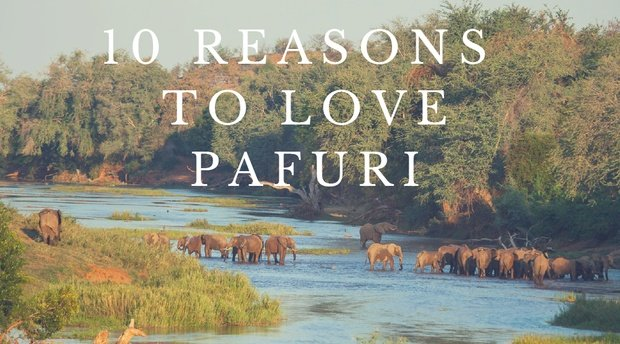 10 Reasons to Love Pafuri Northern Kruger